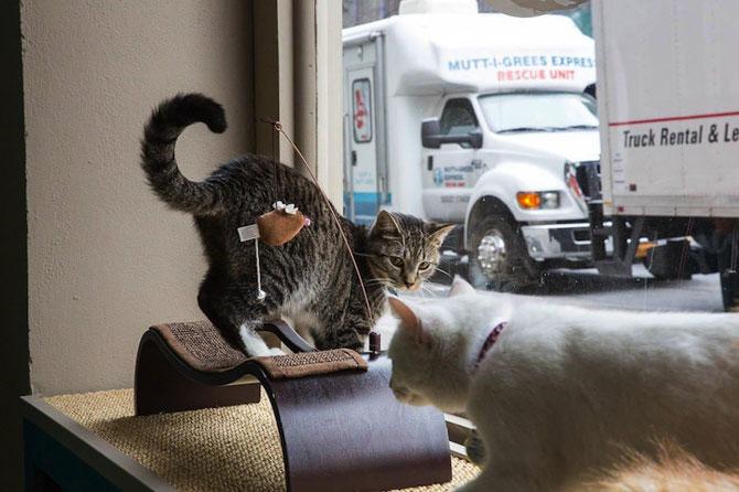 Prima cafenea pentru pisici din SUA - Poza 4