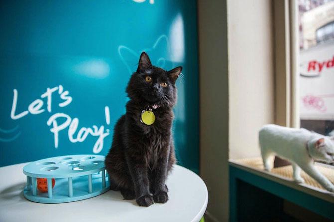 Prima cafenea pentru pisici din SUA - Poza 6