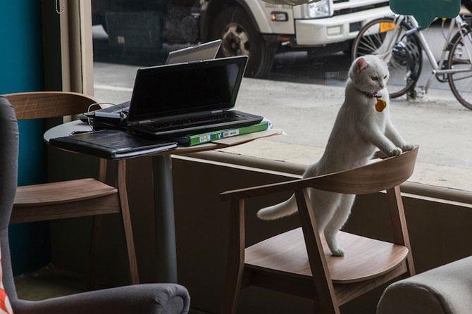 Prima cafenea pentru pisici din SUA - Poza 8