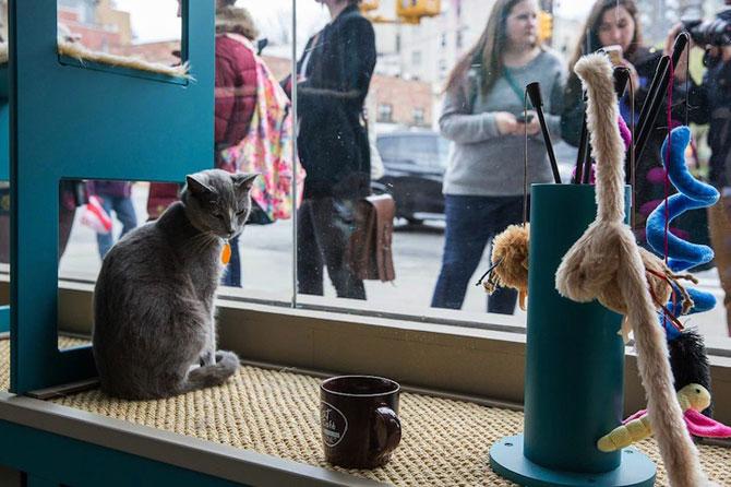 Prima cafenea pentru pisici din SUA - Poza 10