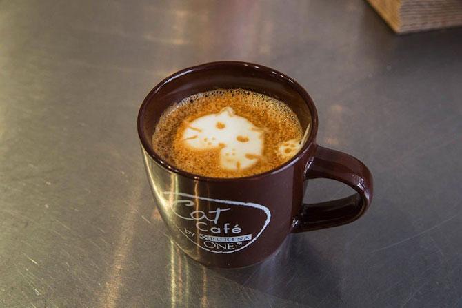 Prima cafenea pentru pisici din SUA - Poza 14
