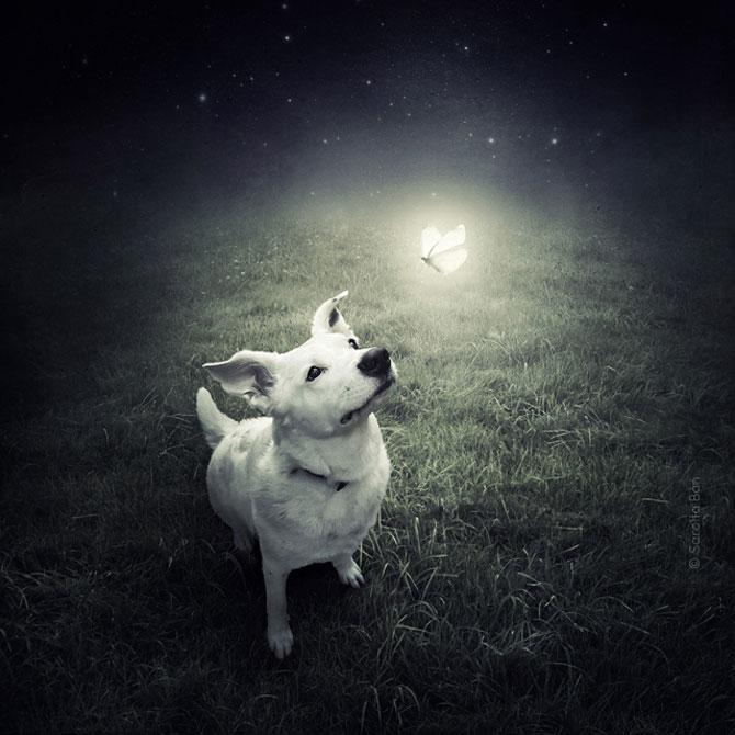 Photoshop pentru animale fara stapan, de Sarolta Ban - Poza 1