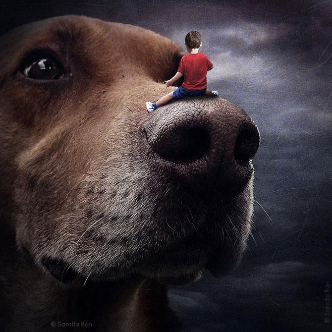 Photoshop pentru animale fara stapan, de Sarolta Ban - Poza 2