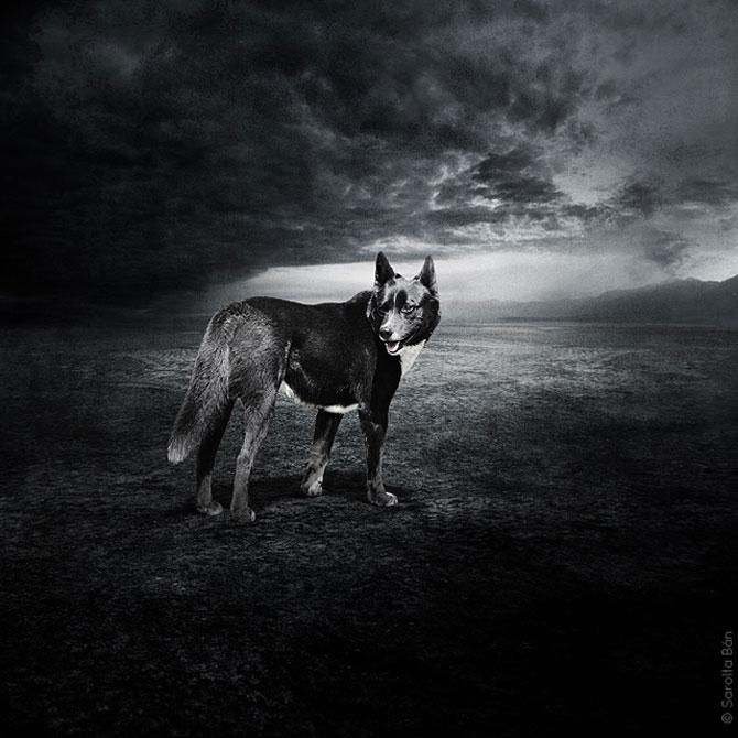 Photoshop pentru animale fara stapan, de Sarolta Ban - Poza 6