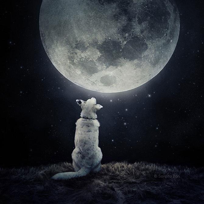 Photoshop pentru animale fara stapan, de Sarolta Ban - Poza 8