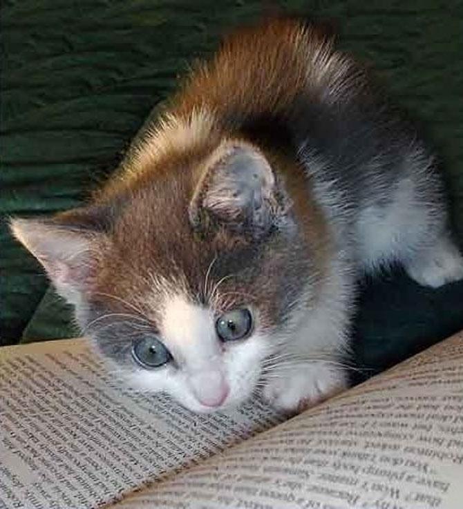 Caini si pisici la ora de lectura - Poza 1