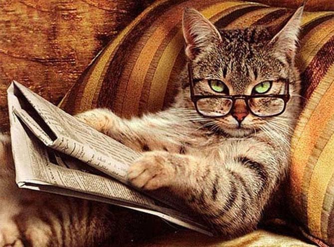Caini si pisici la ora de lectura - Poza 3