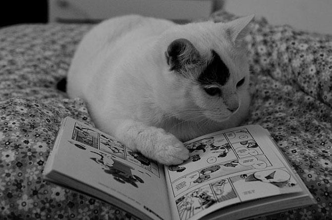 Caini si pisici la ora de lectura - Poza 4