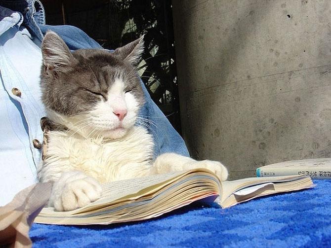 Caini si pisici la ora de lectura - Poza 5