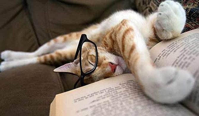 Caini si pisici la ora de lectura - Poza 7