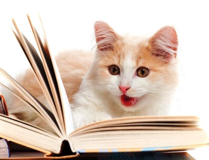 Caini si pisici la ora de lectura - Poza 8