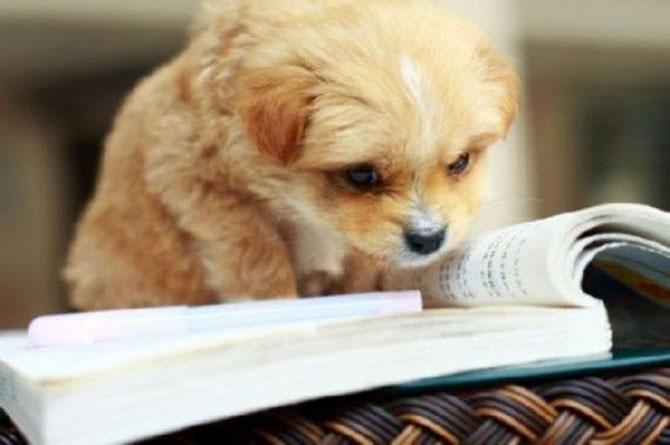 Caini si pisici la ora de lectura - Poza 9