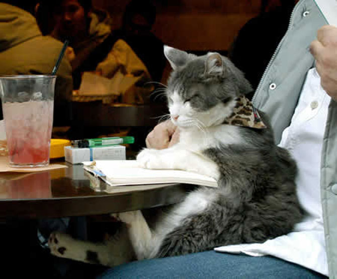 Caini si pisici la ora de lectura - Poza 10