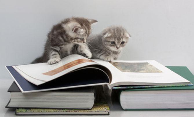 Caini si pisici la ora de lectura - Poza 11