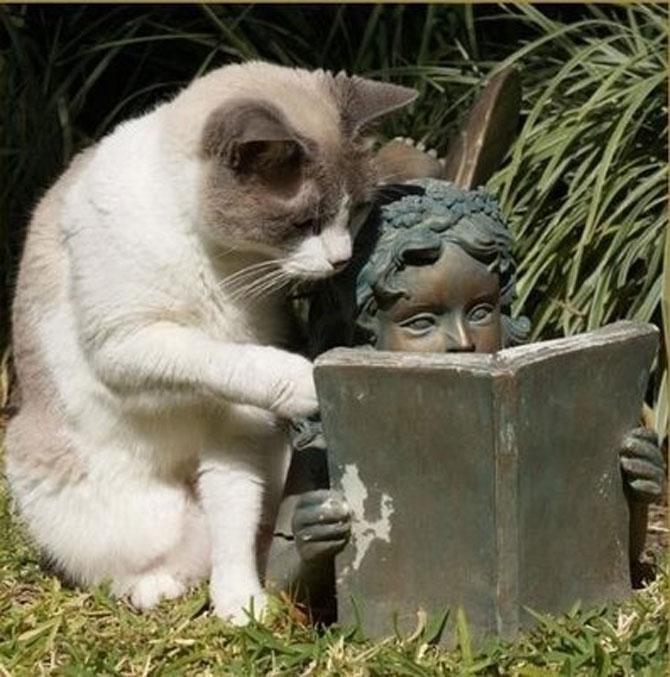 Caini si pisici la ora de lectura - Poza 12