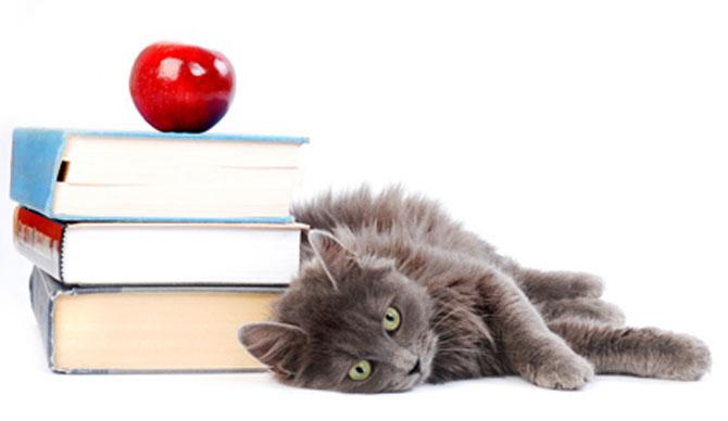 Caini si pisici la ora de lectura - Poza 13