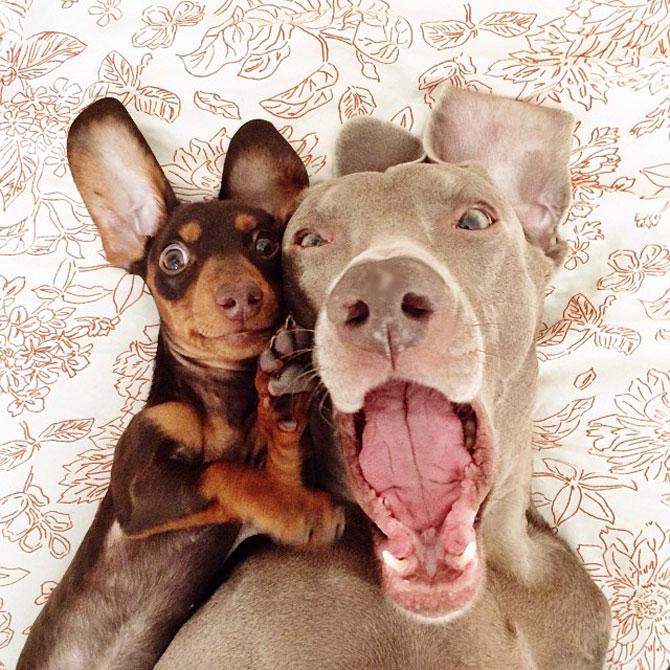 Doi caini sunt cei mai buni prieteni! - Poza 2