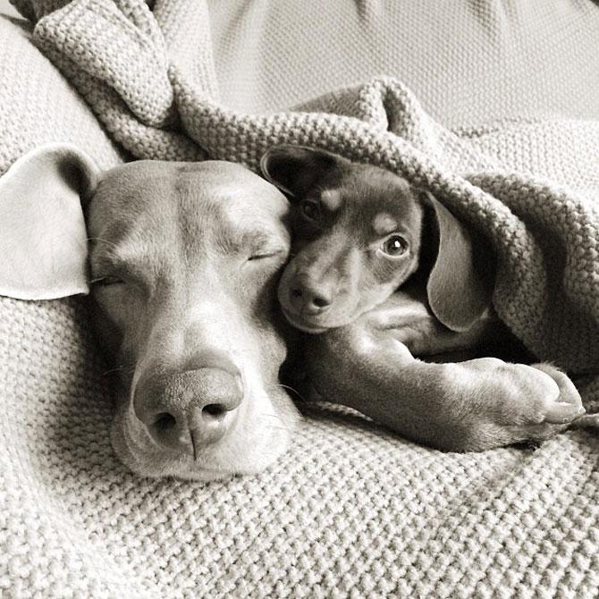 Doi caini sunt cei mai buni prieteni! - Poza 3