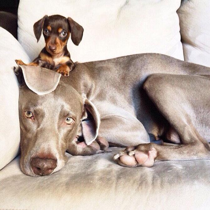 Doi caini sunt cei mai buni prieteni! - Poza 4