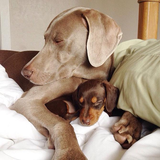 Doi caini sunt cei mai buni prieteni! - Poza 10