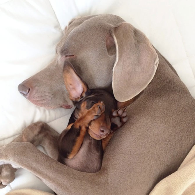 Doi caini sunt cei mai buni prieteni! - Poza 11