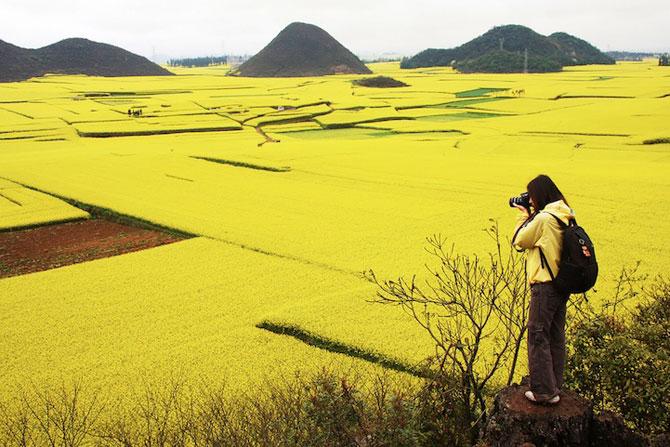 Oceanul de flori galbene din China - Poza 2