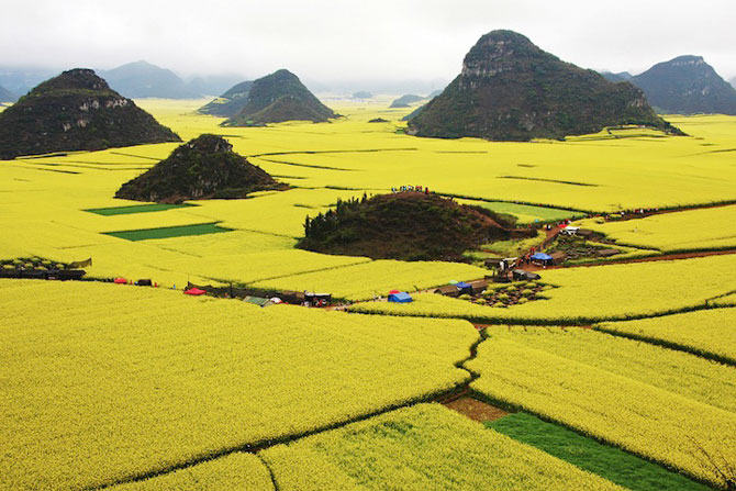 Oceanul de flori galbene din China - Poza 3