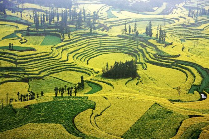 Oceanul de flori galbene din China - Poza 7