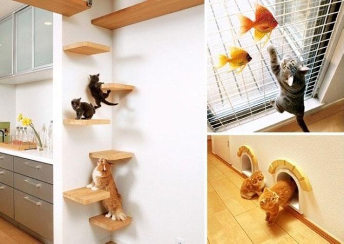 Paradisul pisicilor, de Asahi Kasei - Poza 1