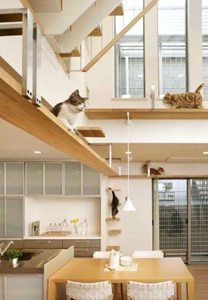 Paradisul pisicilor, de Asahi Kasei - Poza 2