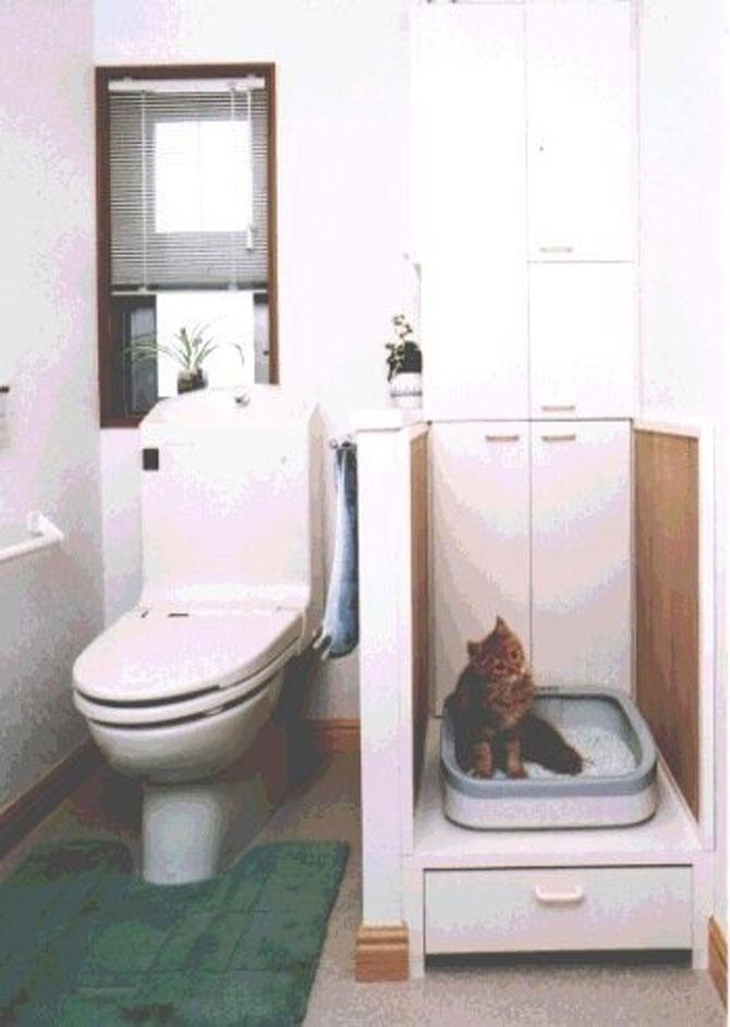 Paradisul pisicilor, de Asahi Kasei - Poza 5