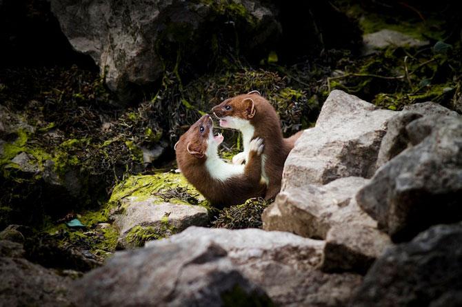 Fotografii extraordinare cu animale obisnuite - Poza 4
