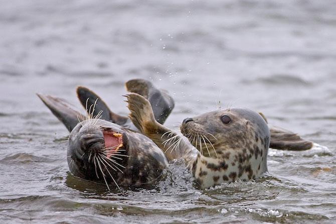 Fotografii extraordinare cu animale obisnuite - Poza 6