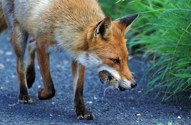 Fotografii cu animale obisnuite, surprinse la momentul potrivit