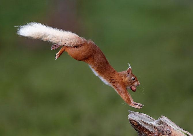 Fotografii extraordinare cu animale obisnuite - Poza 8