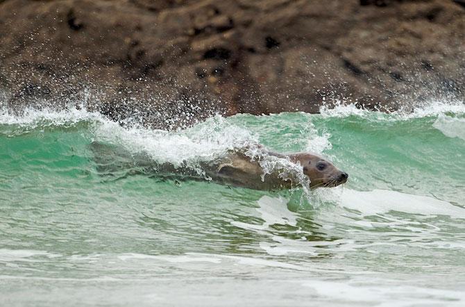 Fotografii extraordinare cu animale obisnuite - Poza 9