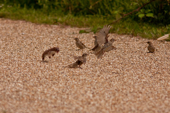 Fotografii extraordinare cu animale obisnuite - Poza 10