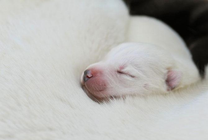 Catei abia nascuti, de Traer Scott - Poza 2