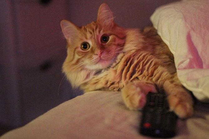Cand stapanii nu-s acasa, pisicile se distreaza! - Poza 5
