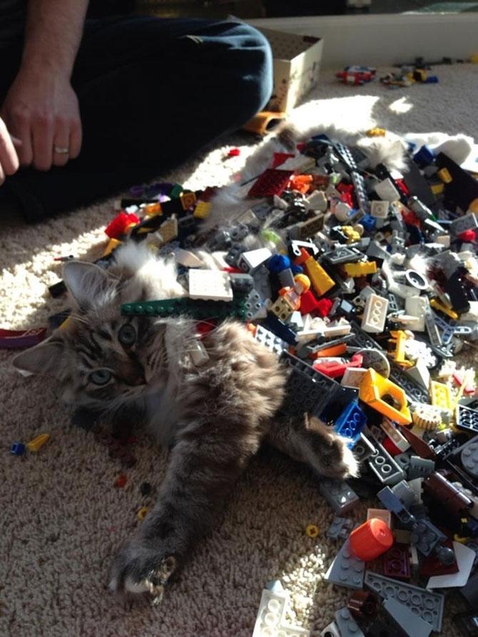 Cand stapanii nu-s acasa, pisicile se distreaza! - Poza 7