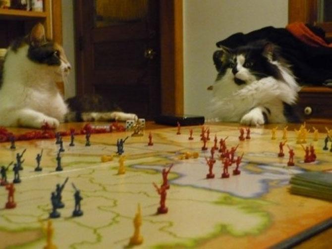 Cand stapanii nu-s acasa, pisicile se distreaza! - Poza 8