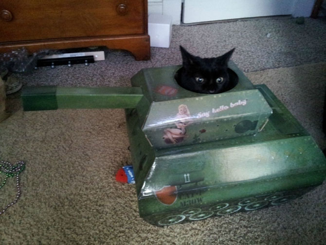 Cand stapanii nu-s acasa, pisicile se distreaza! - Poza 10
