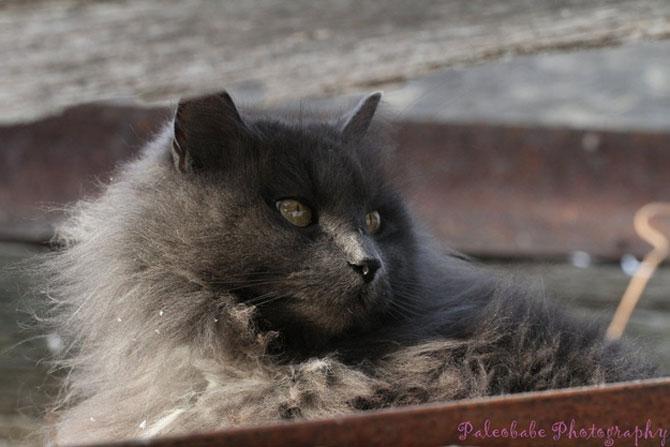 Sygmond, cel mai maiestuos motan - Poza 8