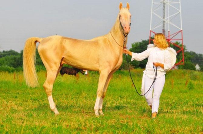 Cel mai frumos cal din lume, gasit pe net - Poza 5