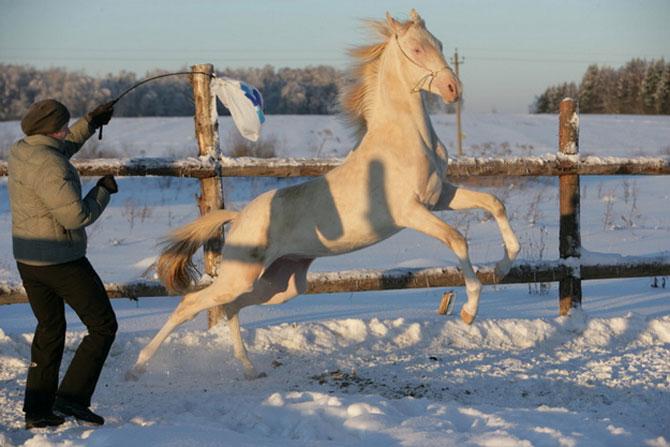 Cel mai frumos cal din lume, gasit pe net - Poza 6