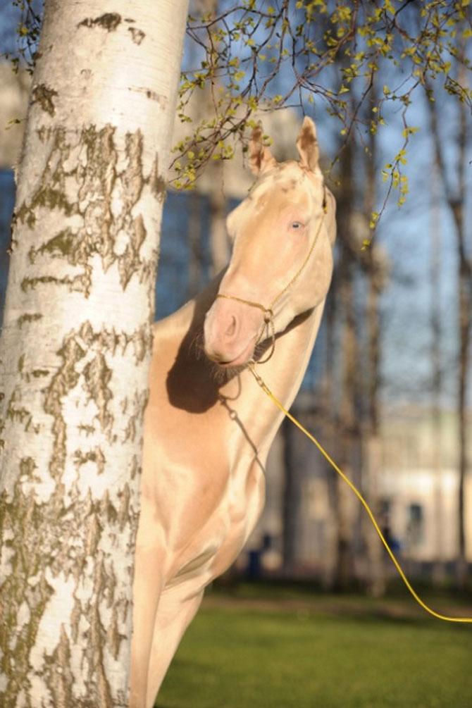 Cel mai frumos cal din lume, gasit pe net - Poza 7