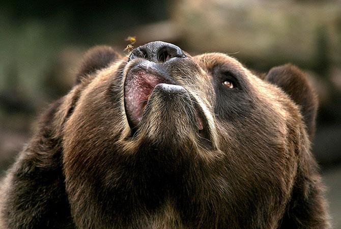 25 de animale haioase din 2013 in fotografii - Poza 2