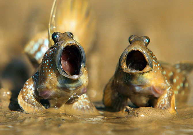 25 de animale haioase din 2013 in fotografii - Poza 4