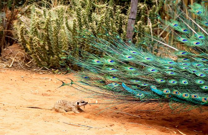 25 de animale haioase din 2013 in fotografii - Poza 5