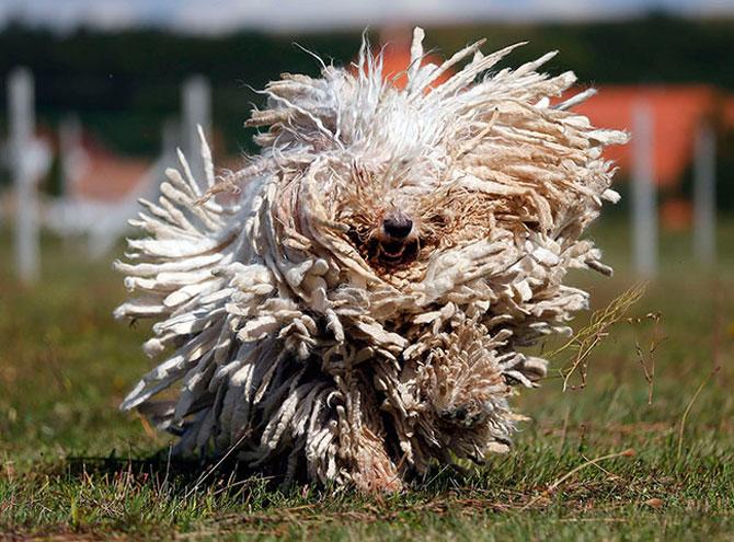 25 de animale haioase din 2013 in fotografii - Poza 9